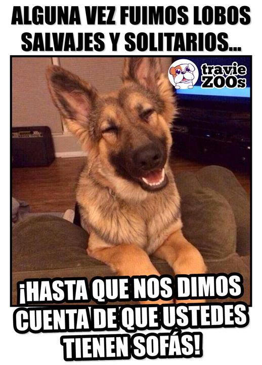 Comida Deliciosa Juguetes Y Sofas Funny Dog Memes Shepherd Puppies Funny Animal Memes