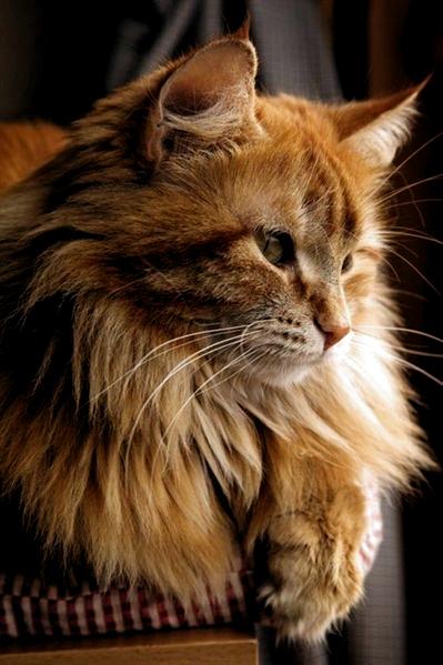 Pin On Katzen