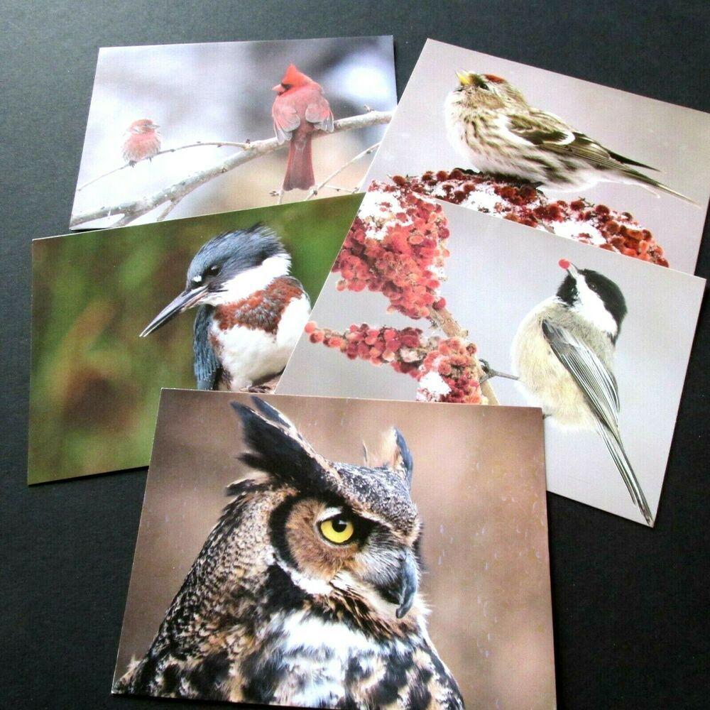 Audubon Christmas Cards 2020 5 Audubon Society Bird Note Cards Cardinal Owl Chickadee