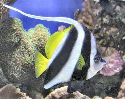 Featured Fish On Sale This Week Reef Safe Fish Fish Salt Water Fish