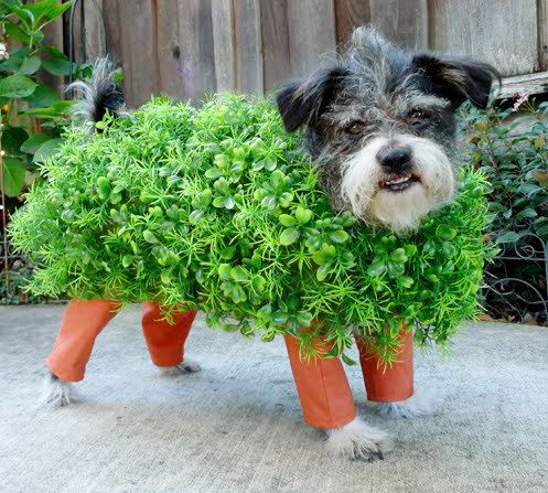 10 Easy Diy Halloween Costumes For Your Pets Chia Pet Costumes Pet Halloween Costumes Chia Pet