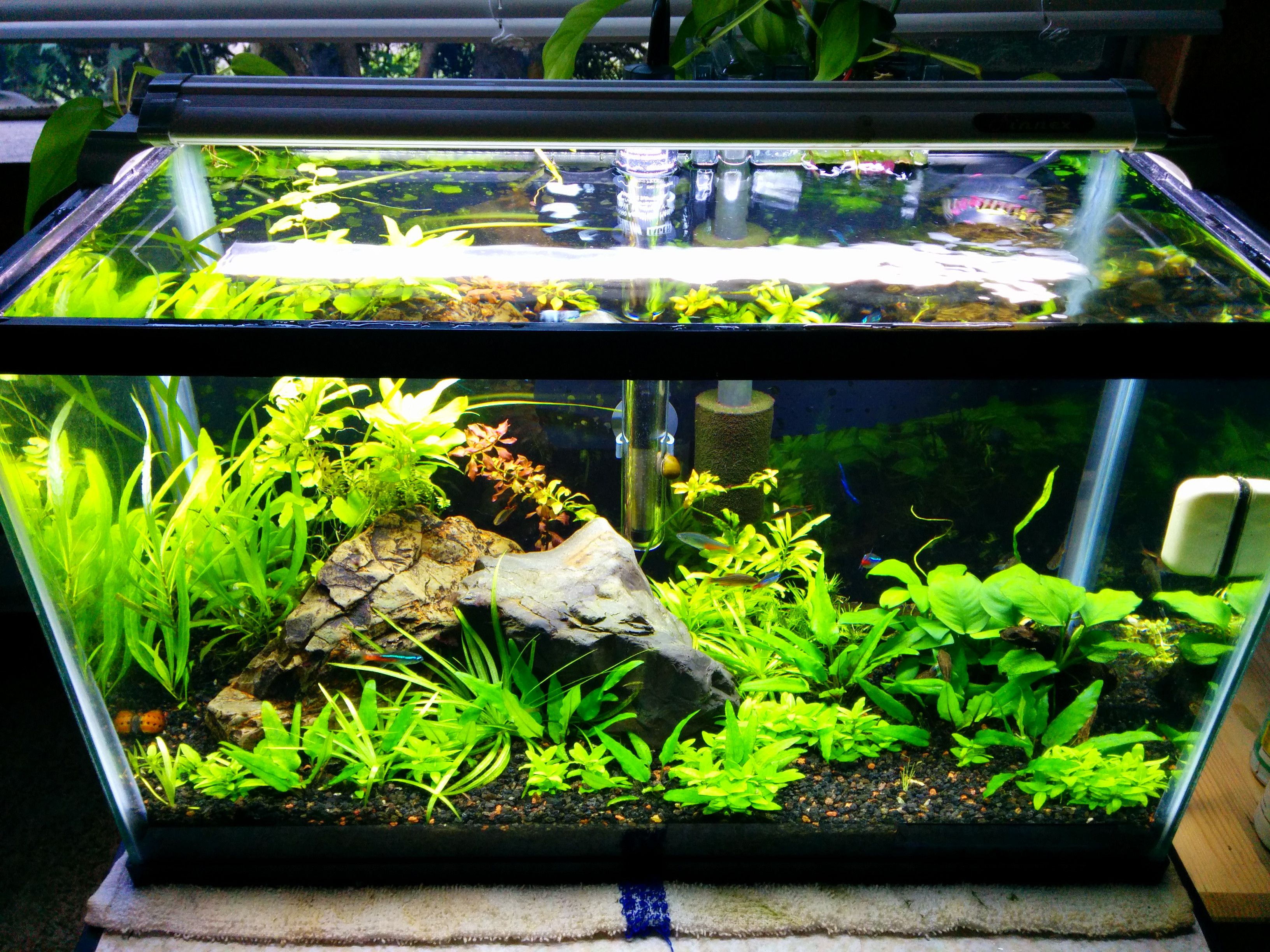 10 Gallon Planted Over A Year With This Setup Betta Fish Tank Fish Tank Plants Fish Tank Terrarium