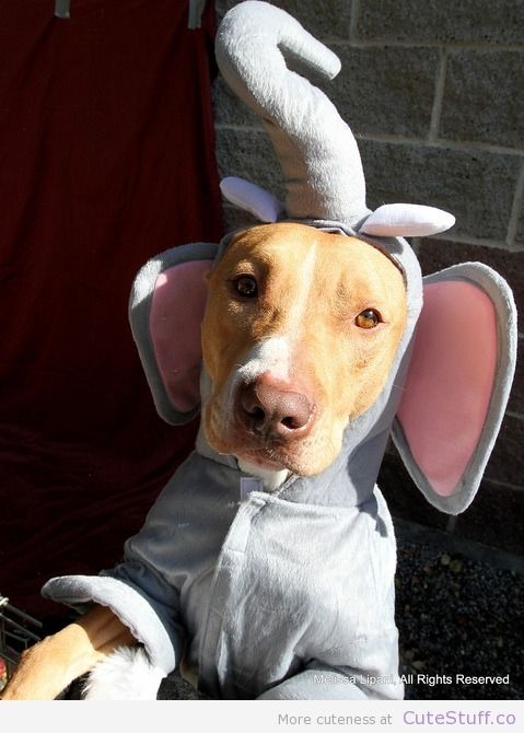 Dog Costume Elephant 15 Adorable Dog Halloween Costumes Dog