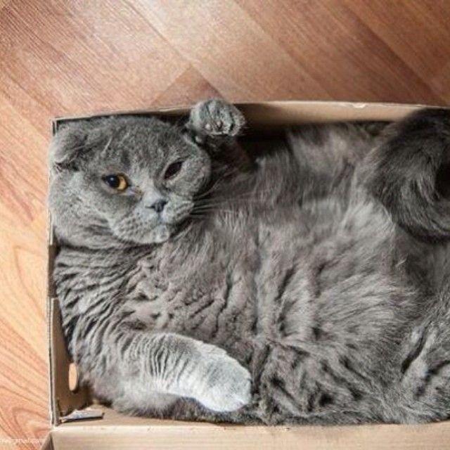 Just a cat in a box