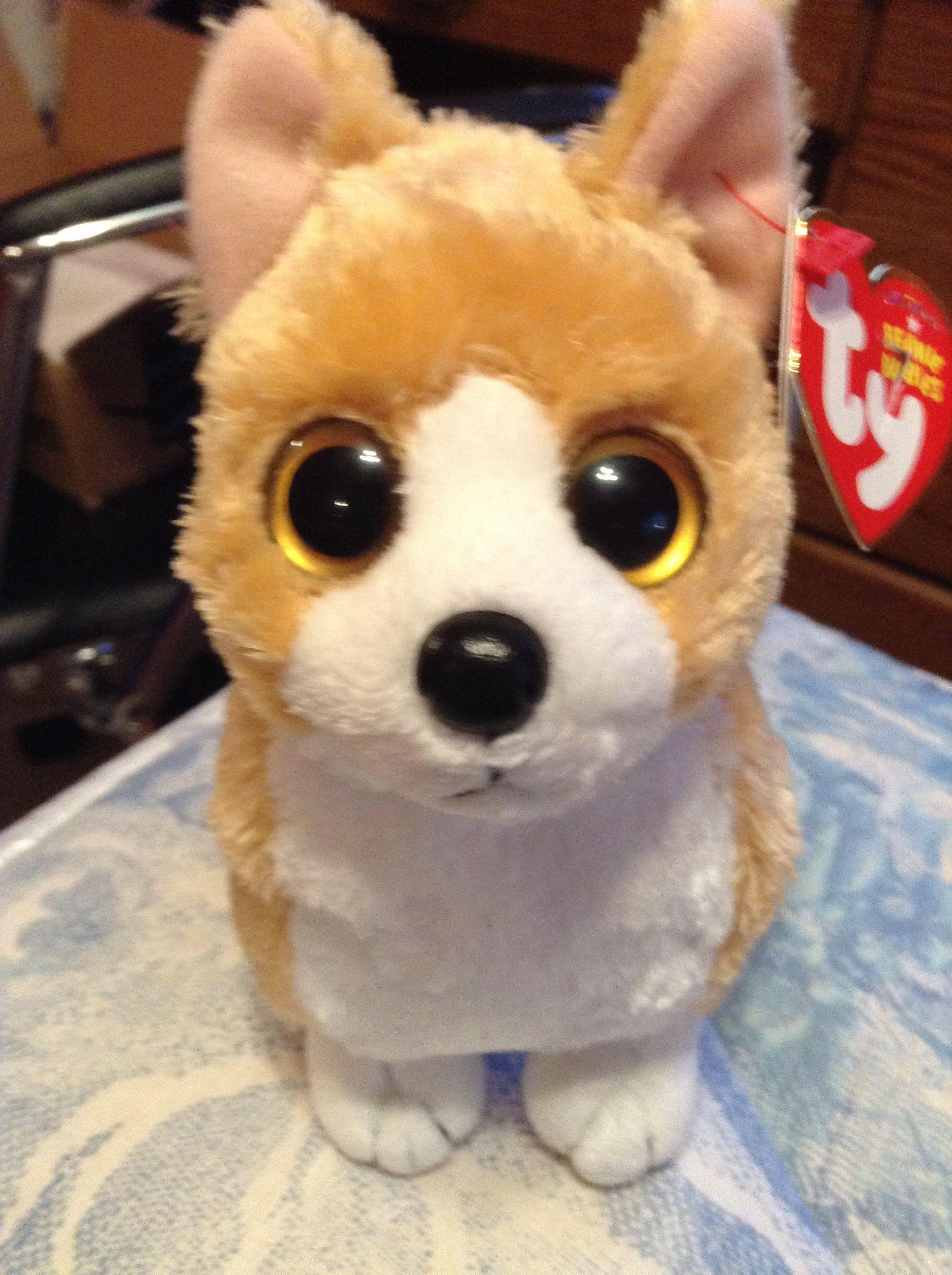 Beanie boo corgi cute beanies beanie boos corgi stuffed animals plushies  nacho beanie boos jpg 1936x2592 5e017db2886