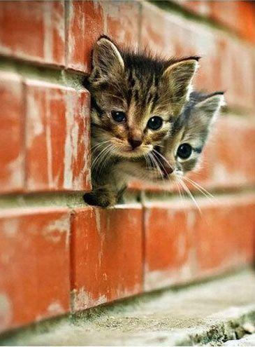 Chatons ~ Kittens