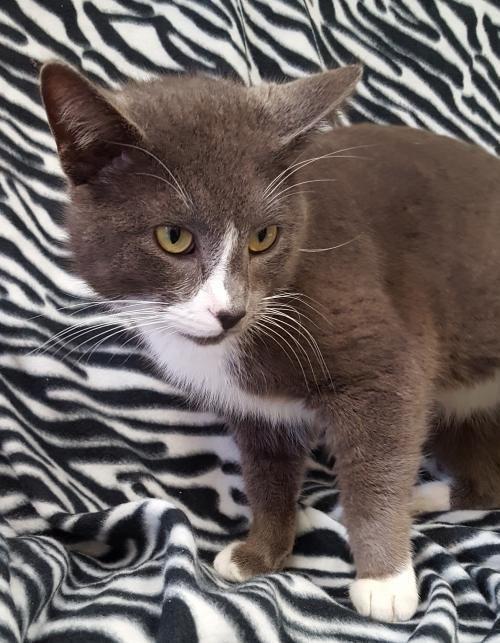 Adopt Mason on Pets, Cats, Pet adoption