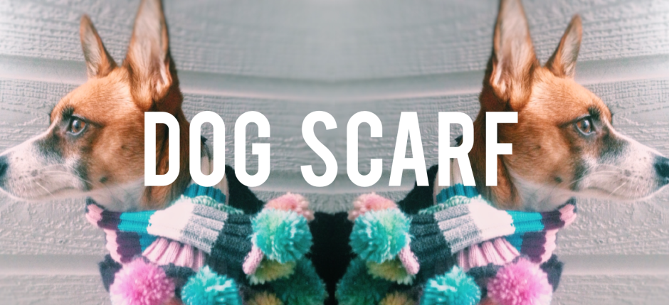 DIY make a cute dog scarf.
