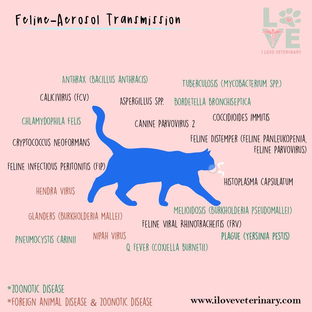 Feline Aerosol Transmission Vet Medicine Vet Tech Student Vet Assistant