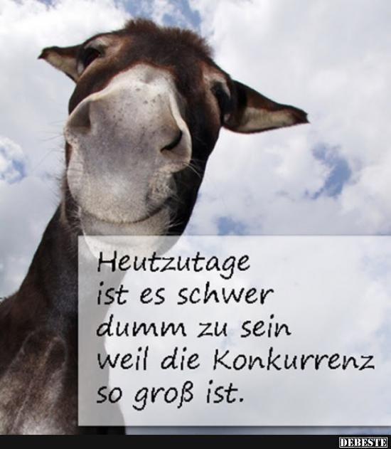 Heutzutage ist es schwer dumm zu sein weil die Konkurrenz so groß ist.. | Lusti... - #heutzutage #konkurrenz #lusti #schwer