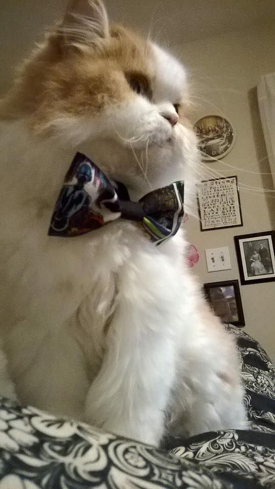 We love Cats too! 10 year old Isabella Masso is taking the pet industry by storm. She hand makes flower bows and bow ties donating a portion of every sale to a rescue or shelter. Watch the Fox 5 News video about her inspiring story at www.isabellaspets... Together, We are Making a Difference One Bow at a Time. @isabellaspetshop #isabellaspetshop #TheBowsIncluded facebook.com/isabellaspetshop