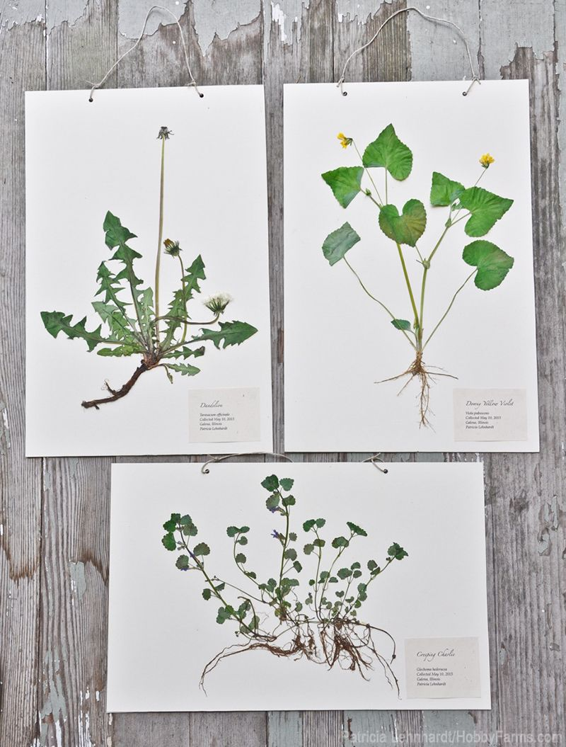 Plants arts and crafts - Find This Pin And More On Natural Craft