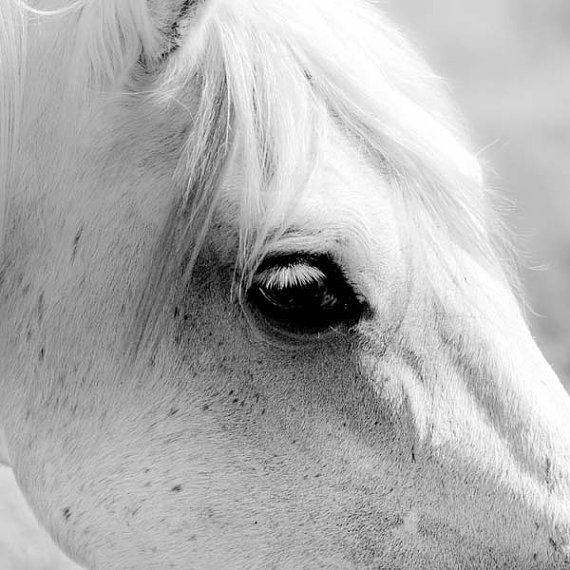 Horse in black and white horse photography print nature photo white horse photo high key nature dark eyes photography 5x5 inches pony