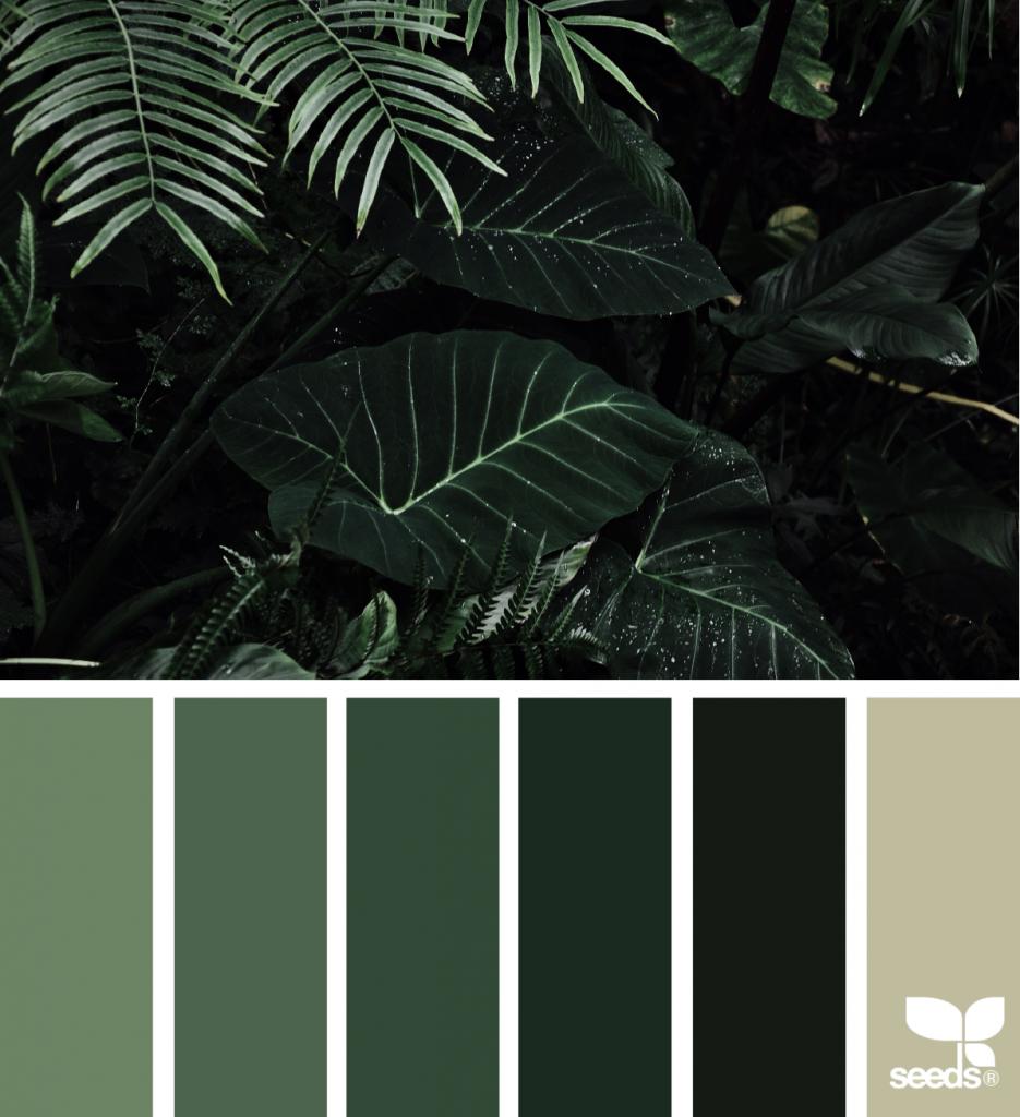 Color Jungle Hue Inspiration and Rain