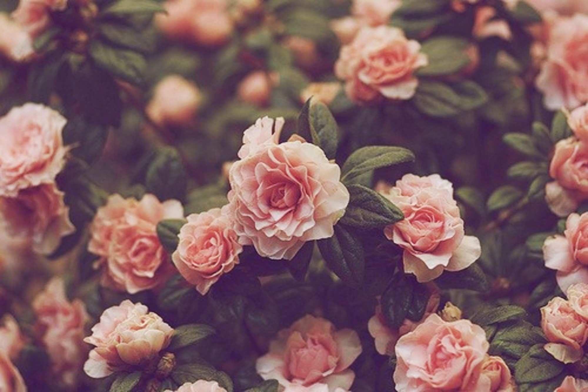 101+ Gambar Bunga Tumblr Terlihat Keren