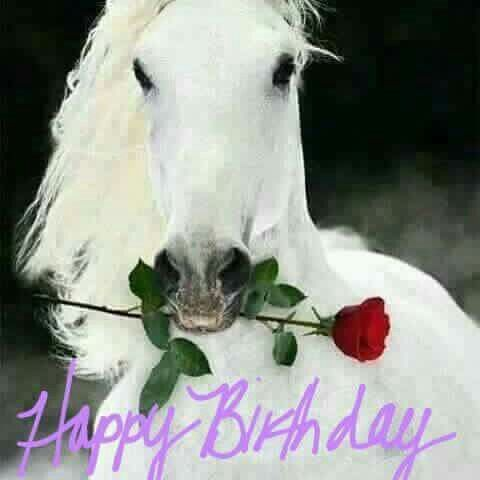 Image Result For Funny Horse Happy Birthday Meme
