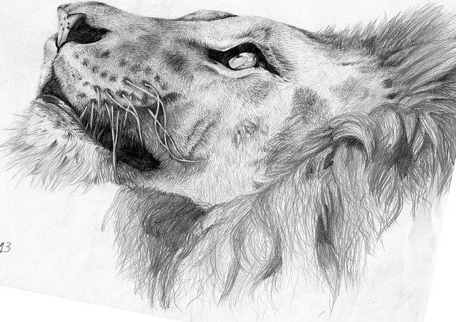 Resultado de imagen para dibujos de leones a lapiz  Arte