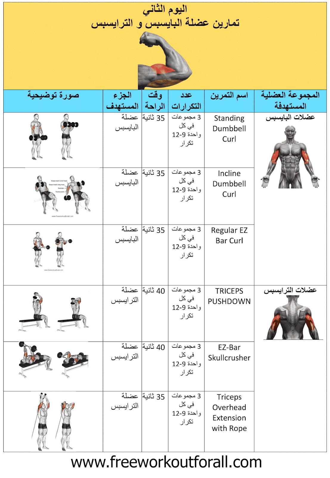 جدول تمارين كمال الاجسام 5 ايام Workout Schedule Gym Schedule Bulking Diet