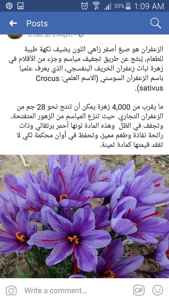 Pin By Enas Kharbotly On Garden Crocus Garden Plants