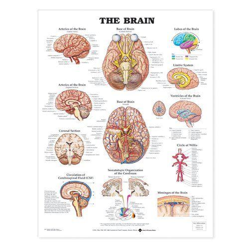 "Framed Medical Poster Understanding Stroke 22/""x28/"" Wall Diagram Educational Informational Doctors Office Chart"