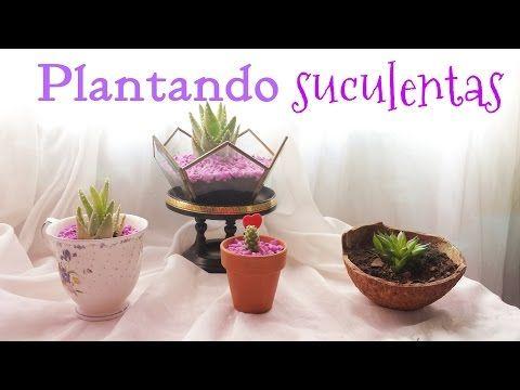 Plantando suculentas - YouTube
