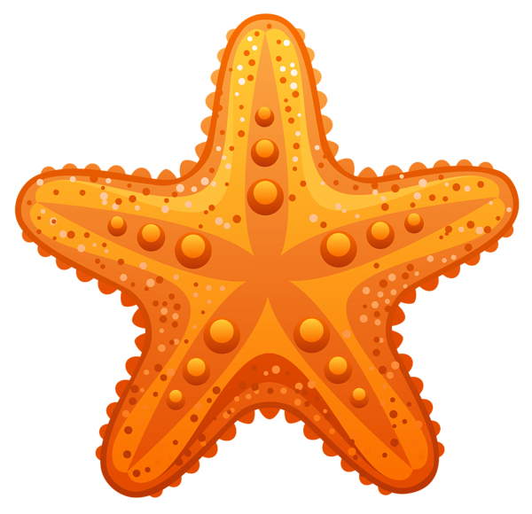 Starfish transparent background. Pin by steve busselman