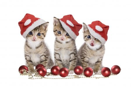 Christmas Cats Cats Wallpaper Id 1226481 Desktop Nexus Animals