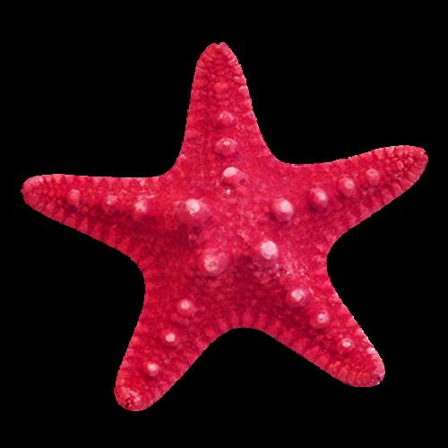 Seashell Free Clip Art Sea Shells Clipart Image Clip Art Seashell Clipart Starfish