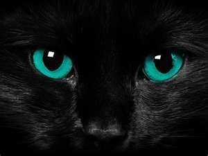 Black cat with blue green eyes