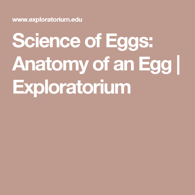 Science Of Eggs Anatomy Of An Egg Exploratorium Life Science