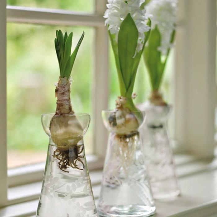 Hyacinth bulb vase. 요즘 너무 예뻐하고있는 히아신스용 구근 화병 :) 아이구 좋다