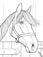 coloriage de cheval et sa belle crinire - Coloriage De Cheval