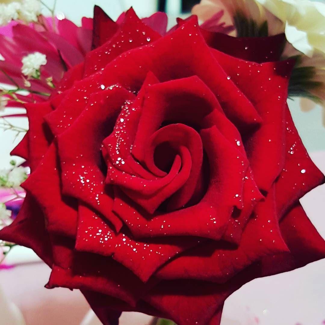 Everlastinglove Rose Redrose Red Weddinglove Rouge Flowers