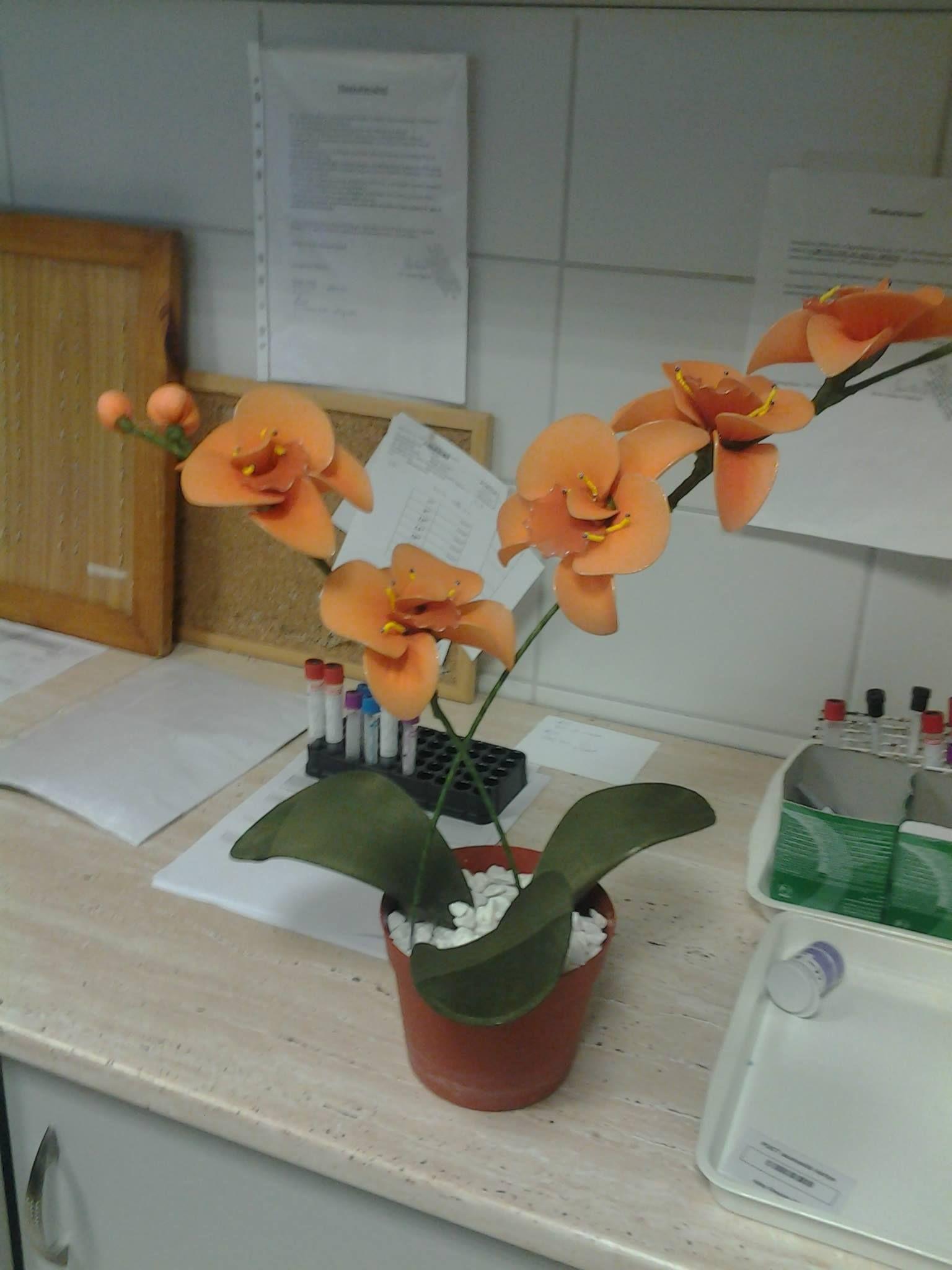 orchidea 1 variáns