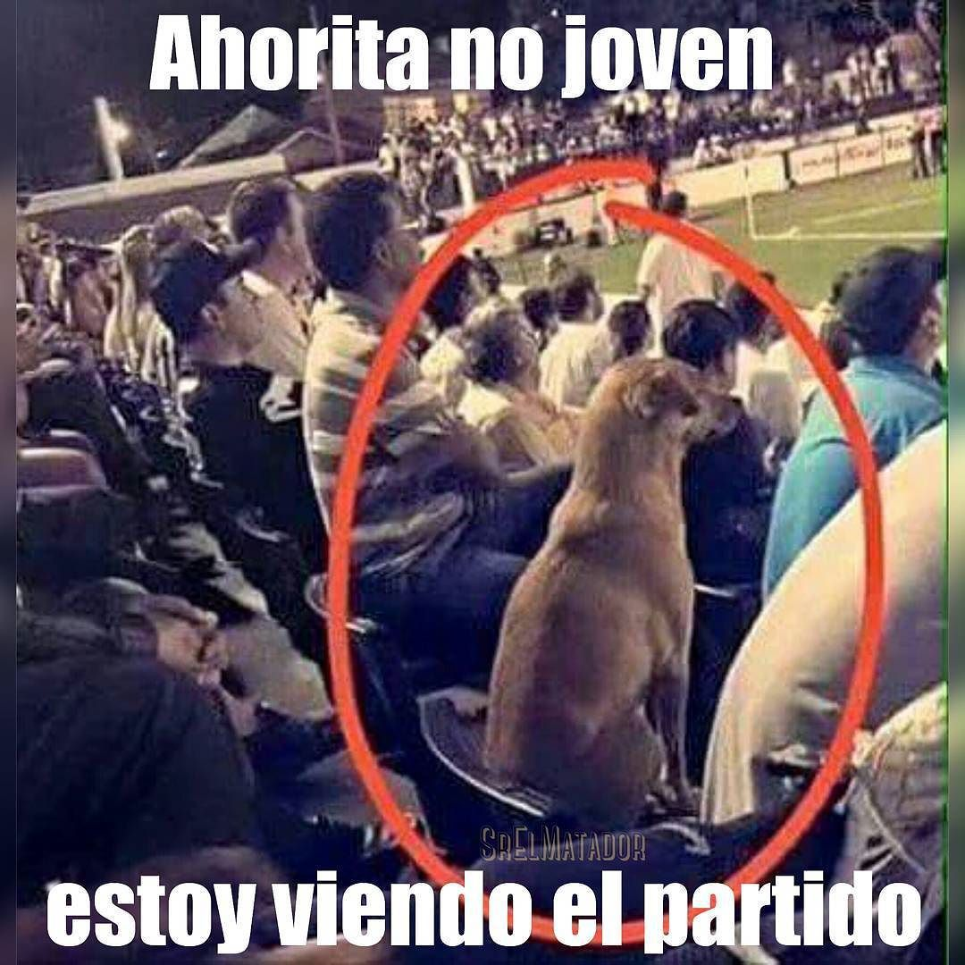 Sr El Matador On Instagram Todavia Hay Partidos Senores Uefa Futbol Lucho Elsalvador Partido Soccer Perro Mascota Sr Memes Funny Memes Humor