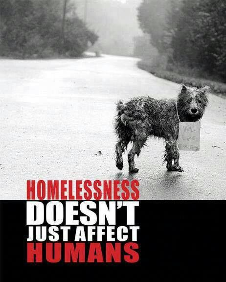 Homelessness Homeless Dogs Animal Advocacy Animals