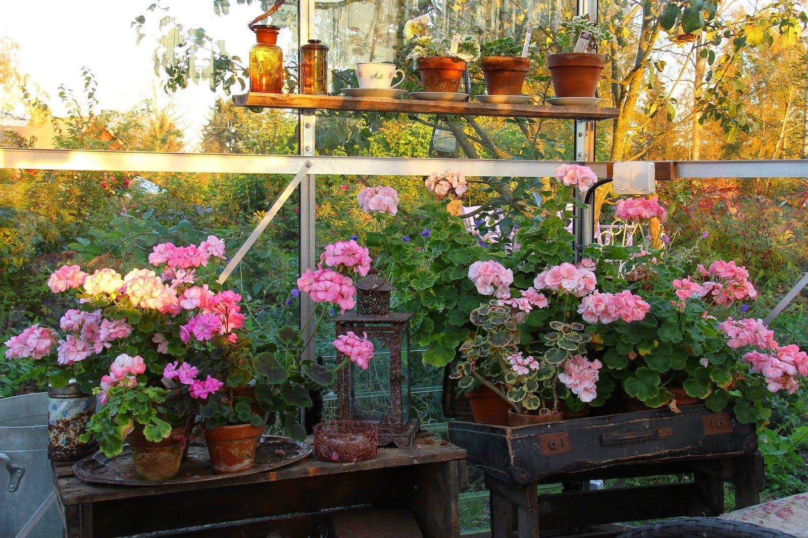 Ruusunmekko garden's greenhouse 'Lataamo' in September 2014 ... on pretty wildlife, pretty barn, pretty water, pretty spring, pretty lawn, pretty green, pretty forest, pretty roses, pretty porch, pretty house, pretty church, pretty shed,