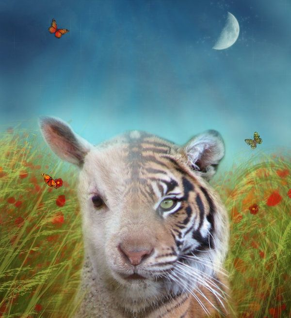 "essay on the tyger and the lamb The two poems that i will analyse in depth, ""the lamb"", and ""the tyger"" has many comparisons and contrasts between the two, although the same writer, william blake, wrote them."