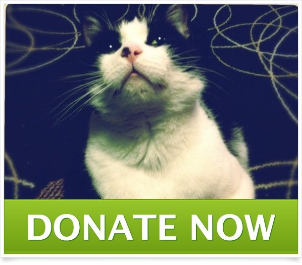 Please help donate or share this link. Our cat is very sick and needs surgery as soon as possible.