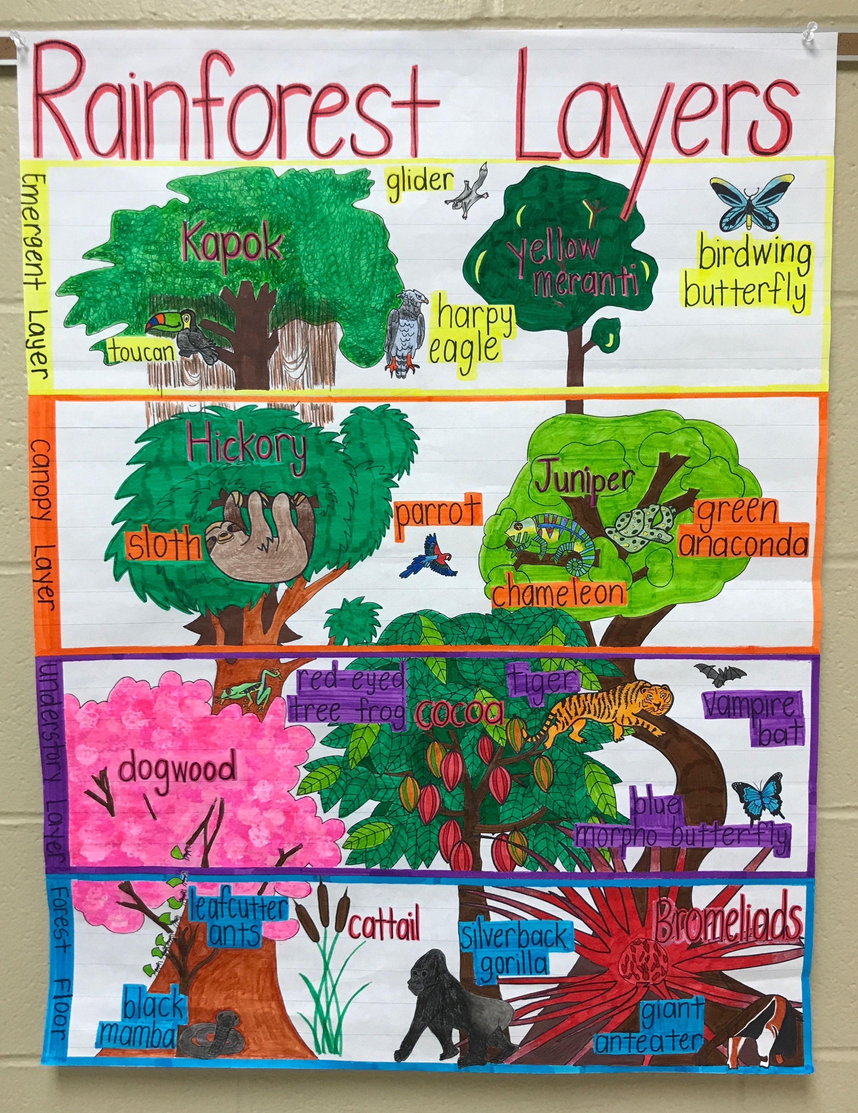 Rainforest Anchor Chart Rainforest Activities Rainforest