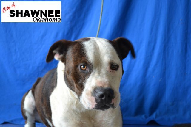City of Shawnee OK - Shawnee Police Department - Animal