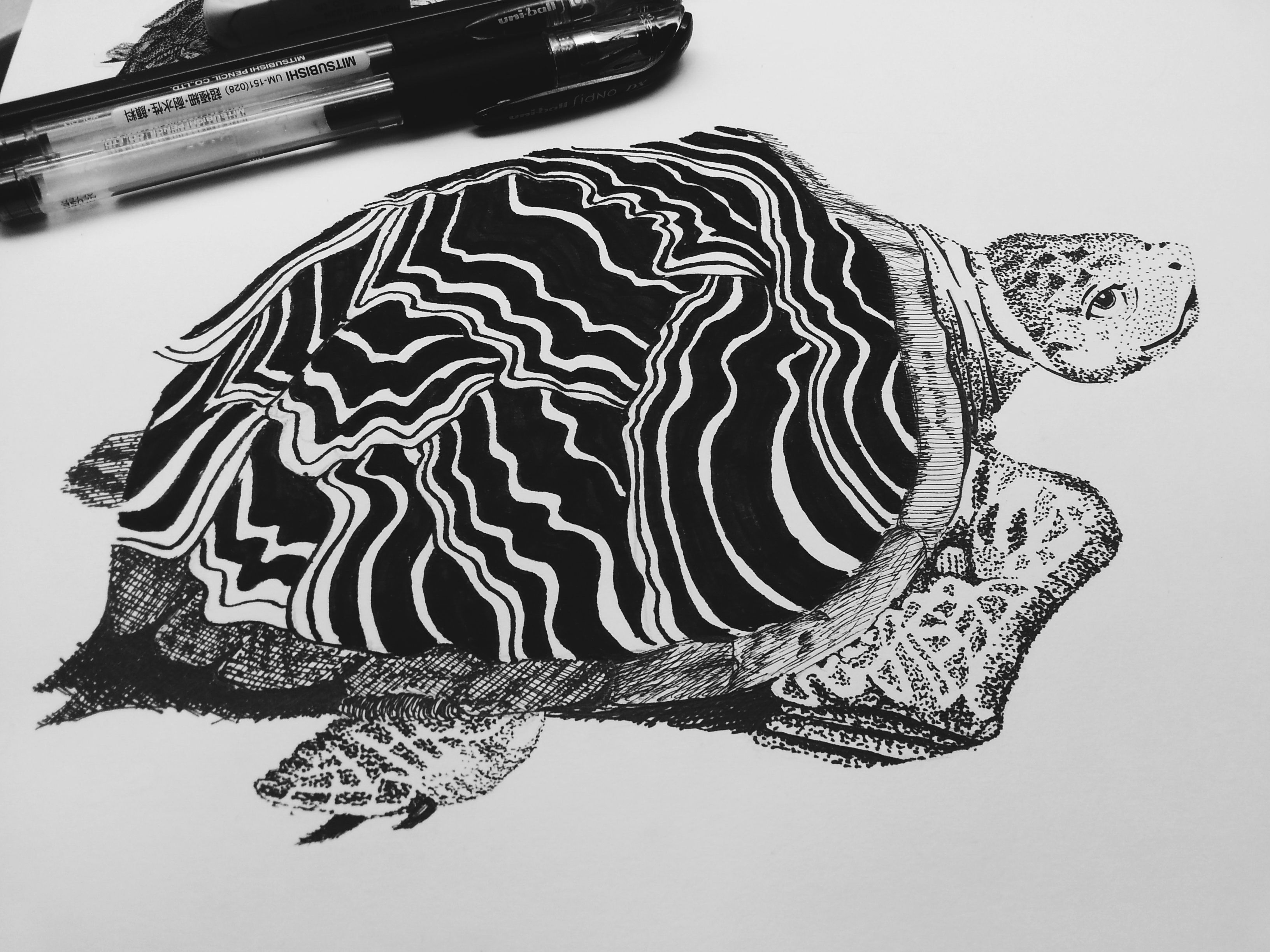 Turtle with graphic shell pattern - pen drawing