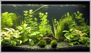 Resultado de imagen para plantas para acuario de agua for Estanque para agua caliente