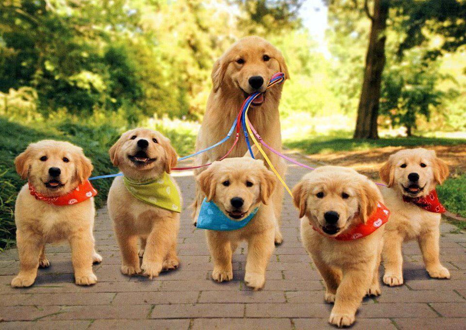 ayyyyyy çok tatlılarrr en sevdiğim hayvan köpek sizinki ne