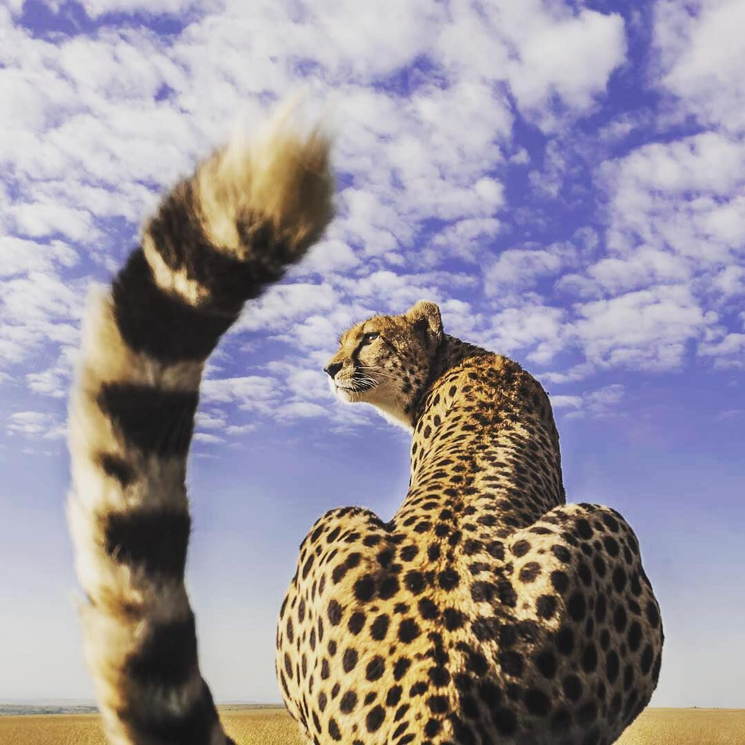 Blue skies and a big cat.