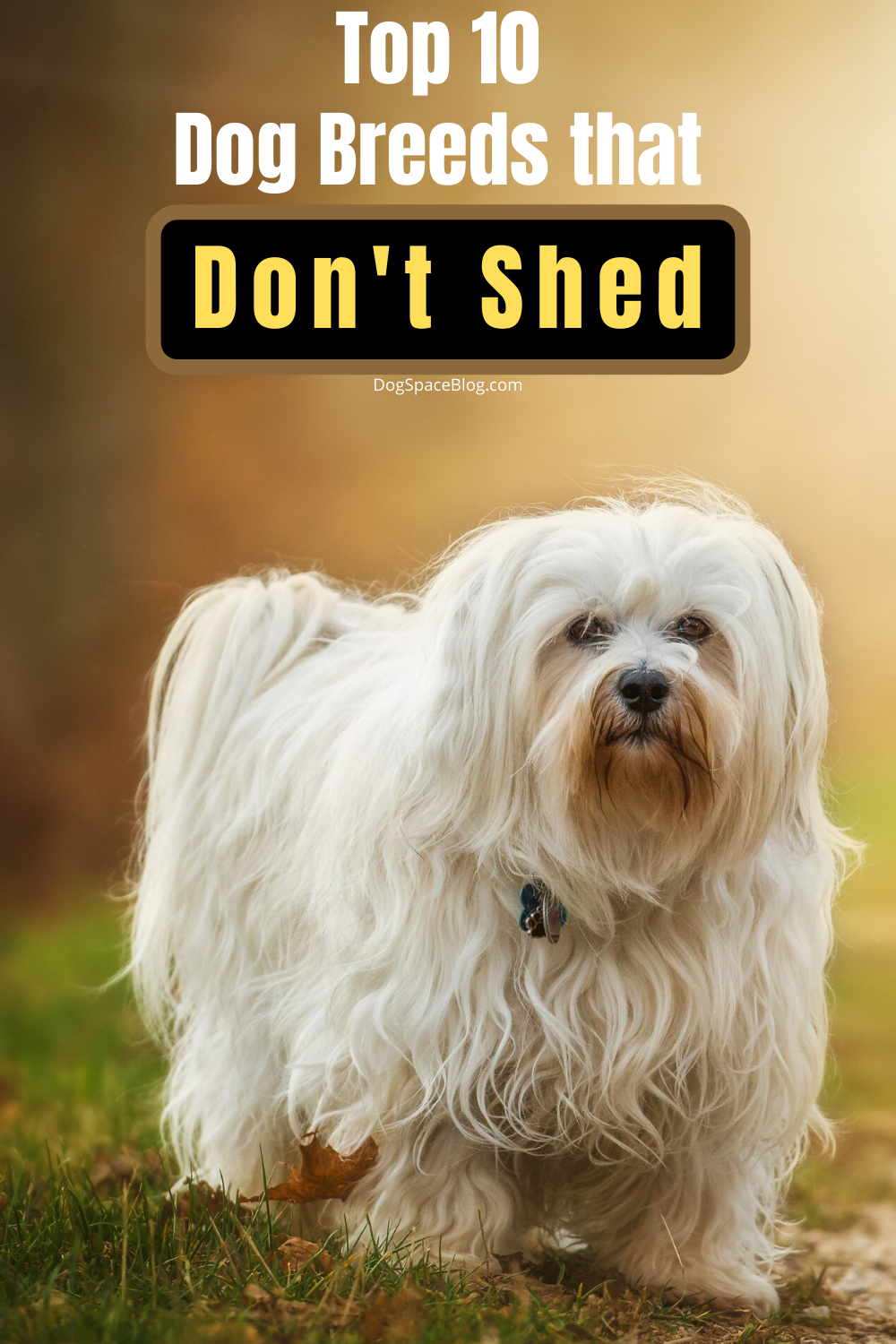 Top 10 Dog Breeds That Don T Shed Dogspaceblog In 2020 Dog Breeds That Dont Shed Small Medium Dog Breeds Family Dogs Breeds