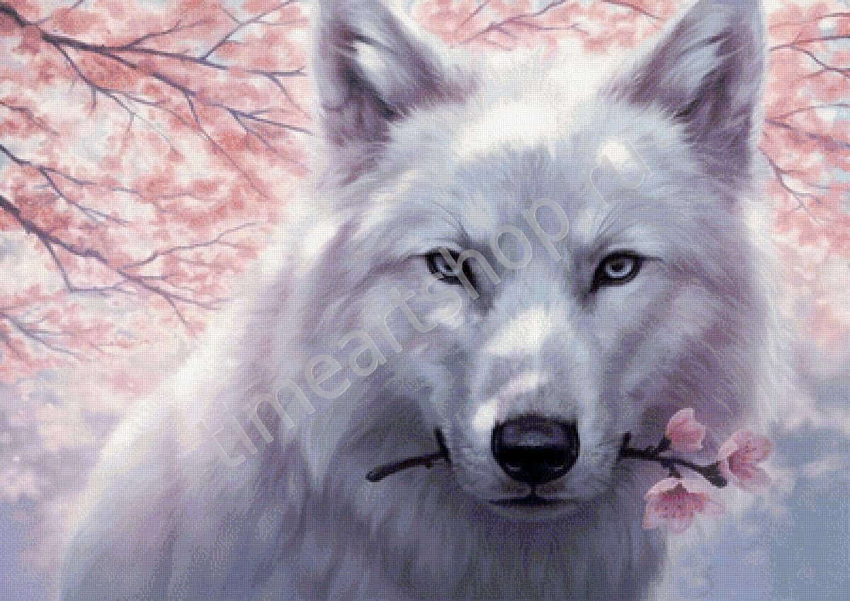 Белый волк весной, картина раскраска по номерам, размер 40 ...