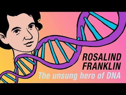 The Discovery Of The Structure Of Dna Was One Of The Most Important Scientific Achievements In Human History The N Rosalind Franklin Life Science Lessons Dna