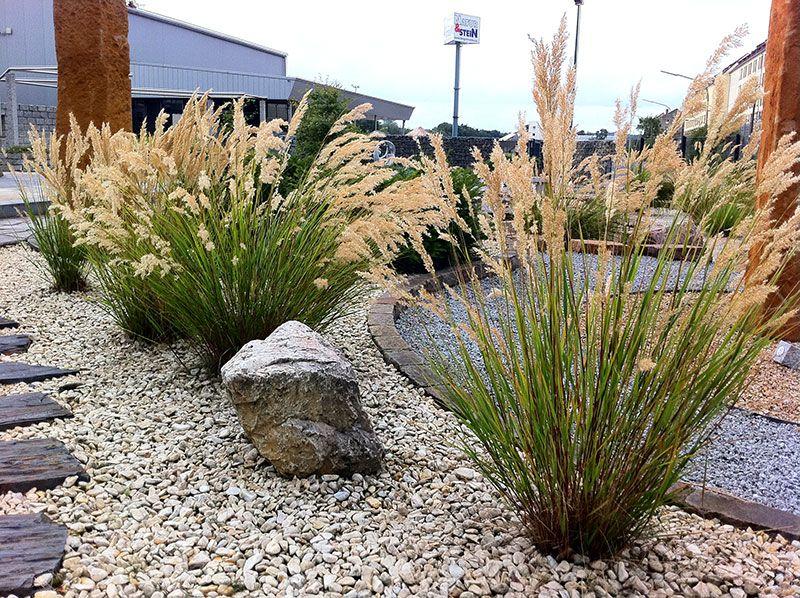 achnatherum calamagrostis gr ser pinterest gr ser. Black Bedroom Furniture Sets. Home Design Ideas