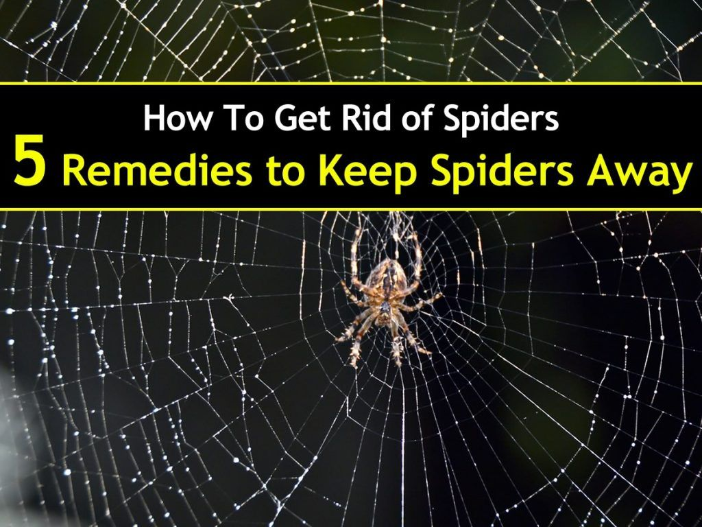 5 Simple Solutions to Get Rid of Spiders Get rid of
